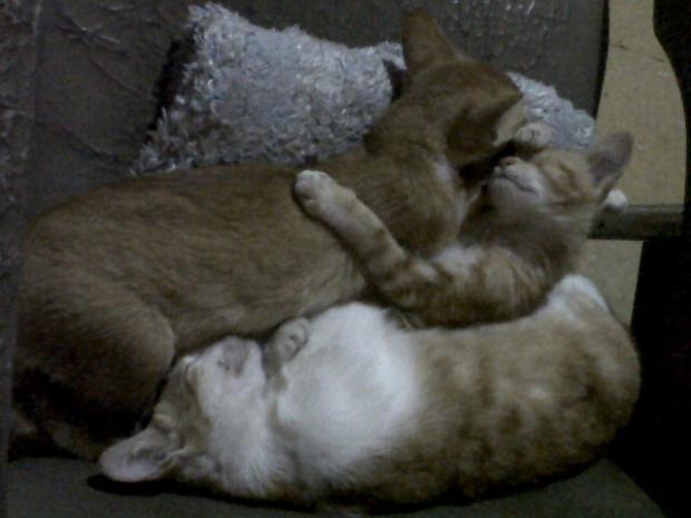 Cats @ my house :3 sleeping =w=